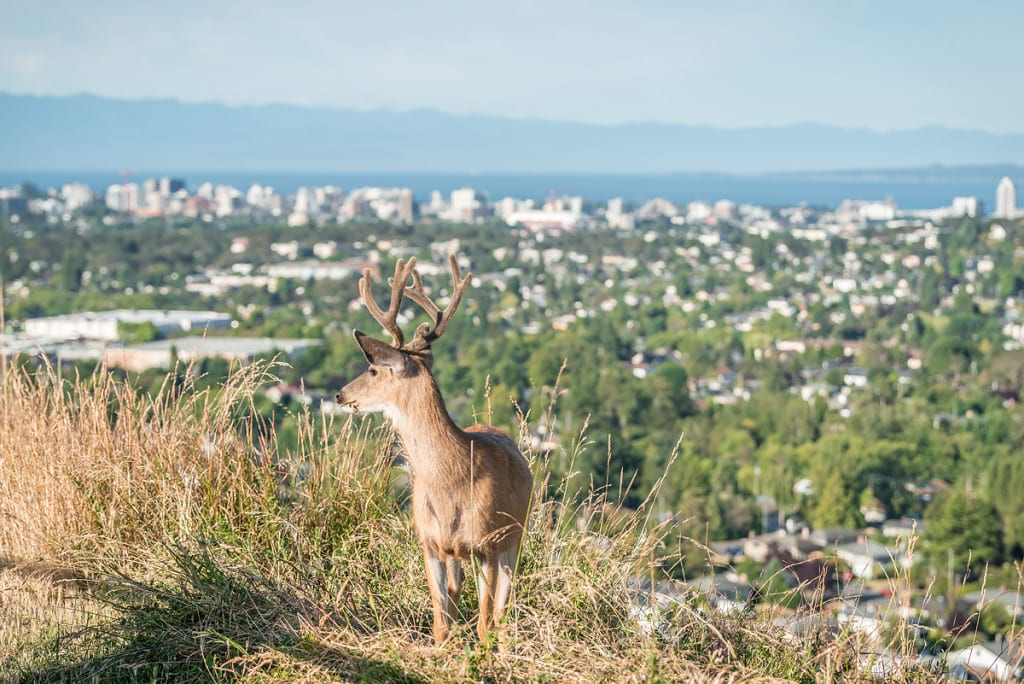 Mt. Tolmie Park, Saanich East, The Condo Group Real Estate