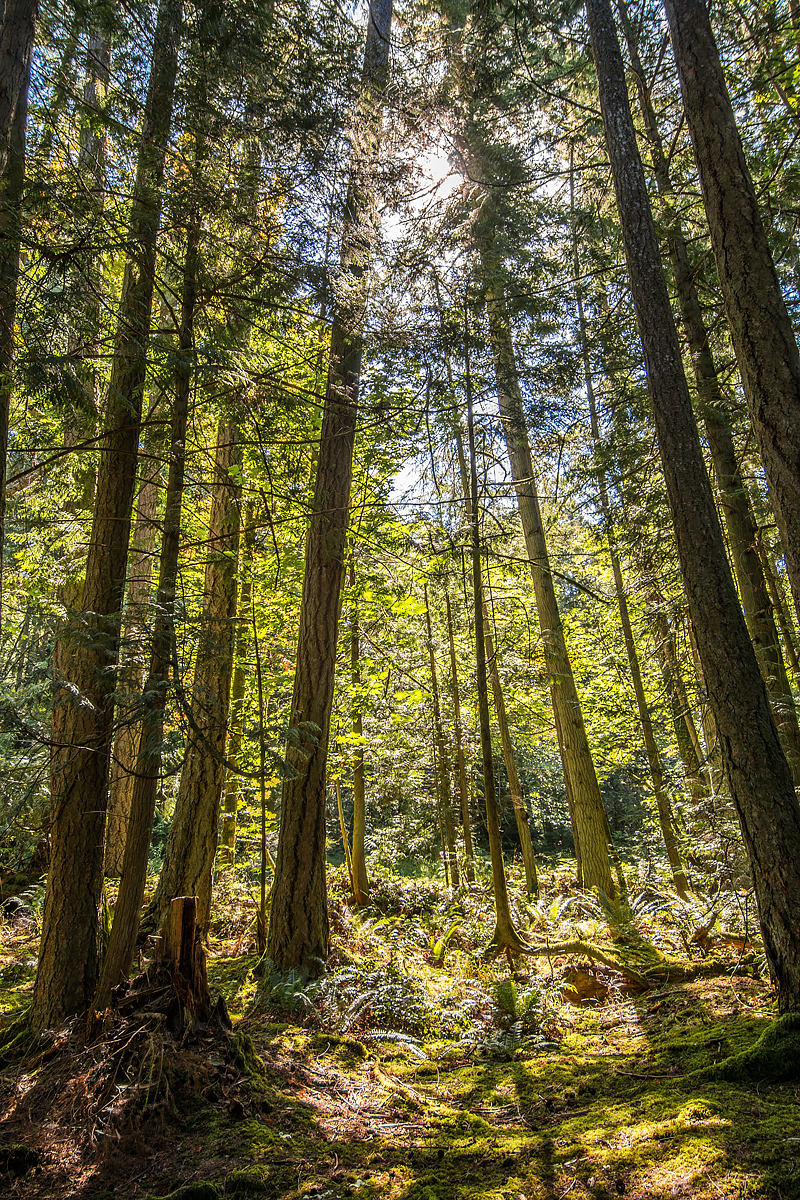 Saanich West, Trees